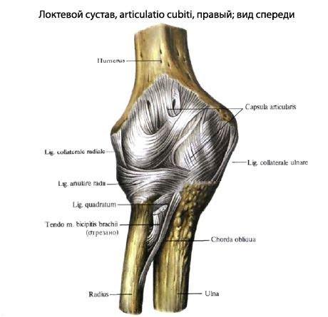 hajlításkor ízületi fájdalom térdízületek artrózisa 1 fok