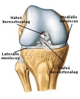 meniszkus térd sérülés)