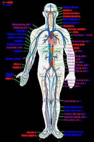 az erek és az idegek ízületeinek károsodása