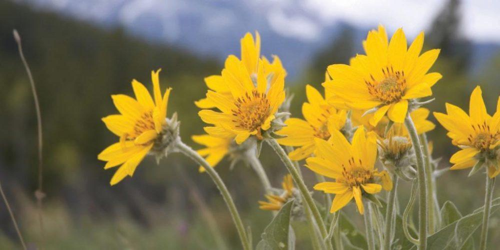 Ezek a legjobb gyógynövények ízületi fájdalom, gyulladás és visszér ellen - EgészségKalauz