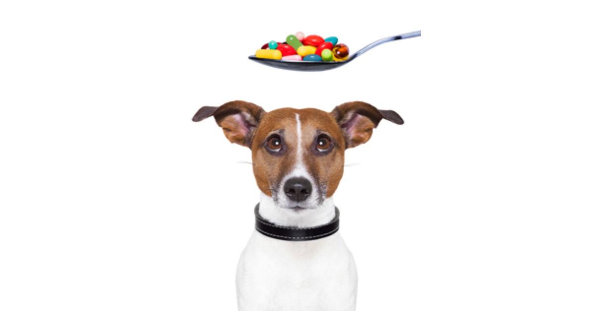 kutya szőr ízületi fájdalmak esetén)