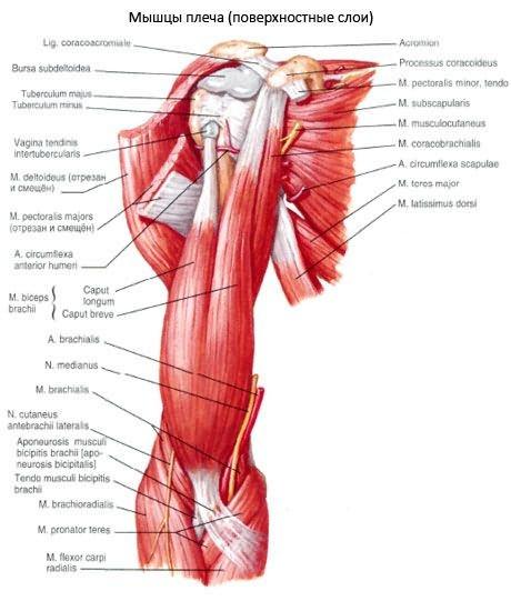 a phalangeális ízületek ízületi kezelése)