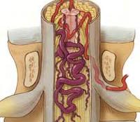 az agyi keringési gyógyszerek fejlesztése az osteochondrosis kezelésére