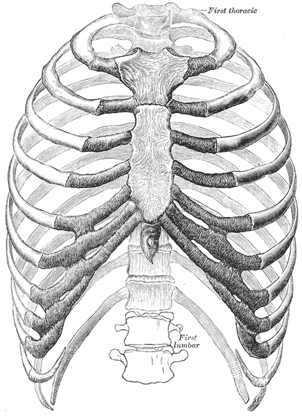 A sternoclavicularis ízület patológiája és kezelése