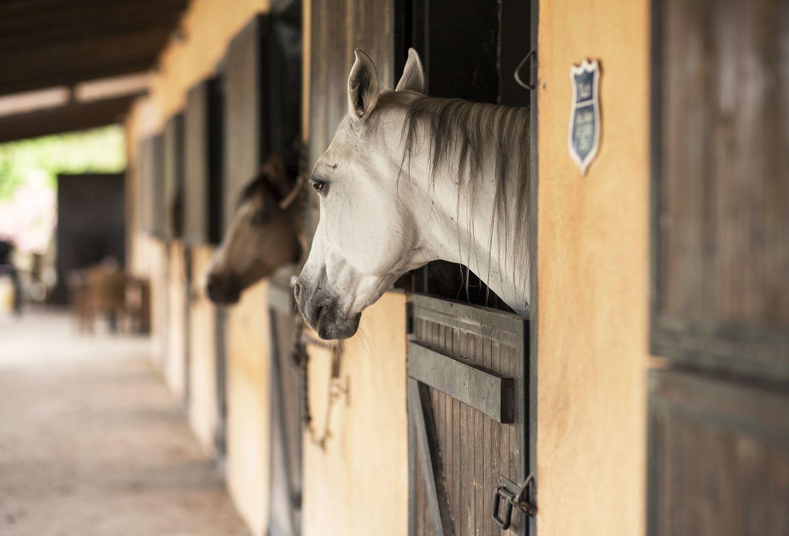 kenőcs ló számára ízületekhez)