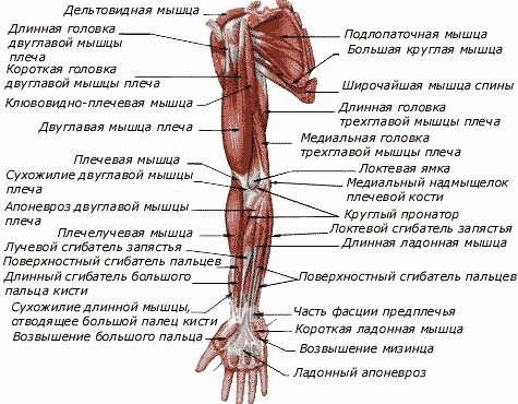 a vállízület gennyes artrózisa