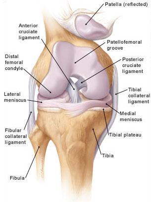 a térd belső gyulladása arthrosis kezelés artrodarinnal