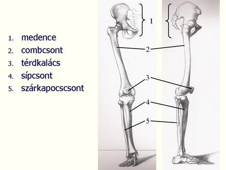 medence a bokaízület artrózisához csípőfájdalom kezdődik