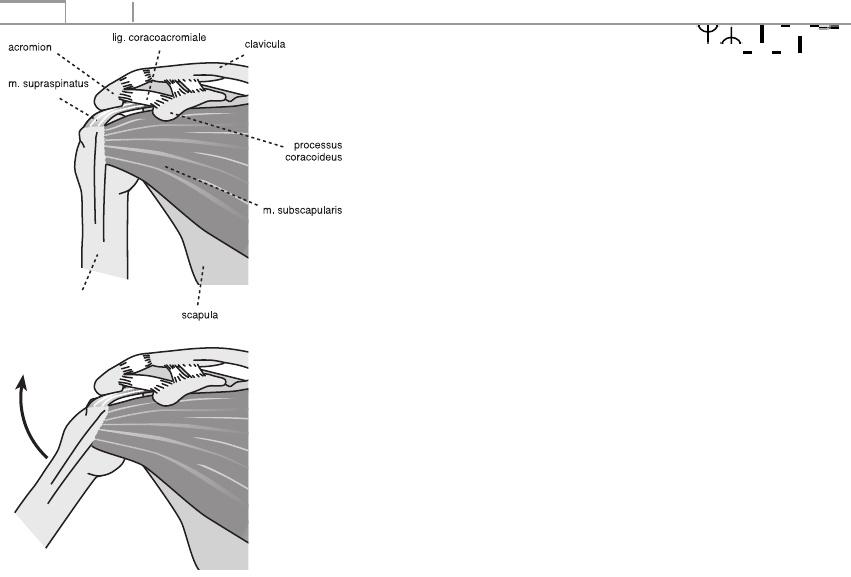 Hogyan lehet megismerni a lábujjak eredetét - Diszplázia