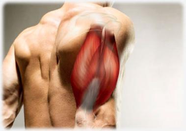 hogyan lehet fejleszteni a könyökízületet egy sérülés után