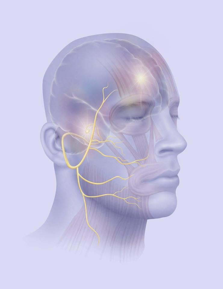 izomfájdalom az arc ízületeiben