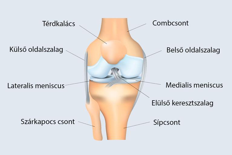 térdízületi kezelés ii. fokú meniszkusz károsodása