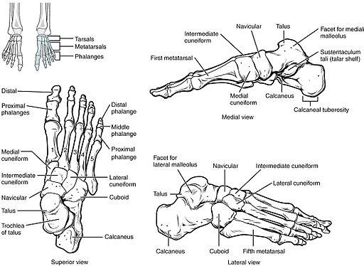 sérülnek a láb ízületei járás közben)