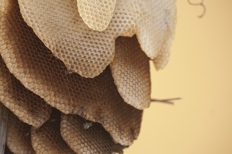 méhészeti kezelés)