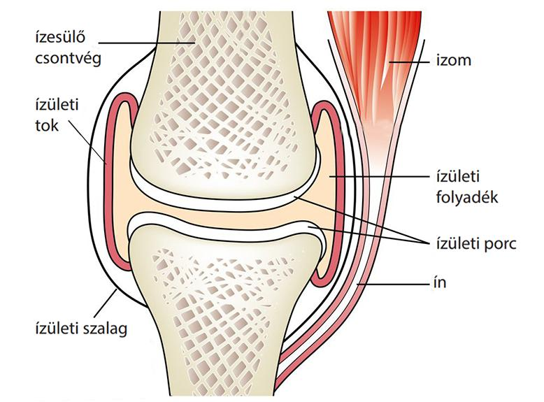 mi a helyzet a csontok és ízületek sérüléseivel