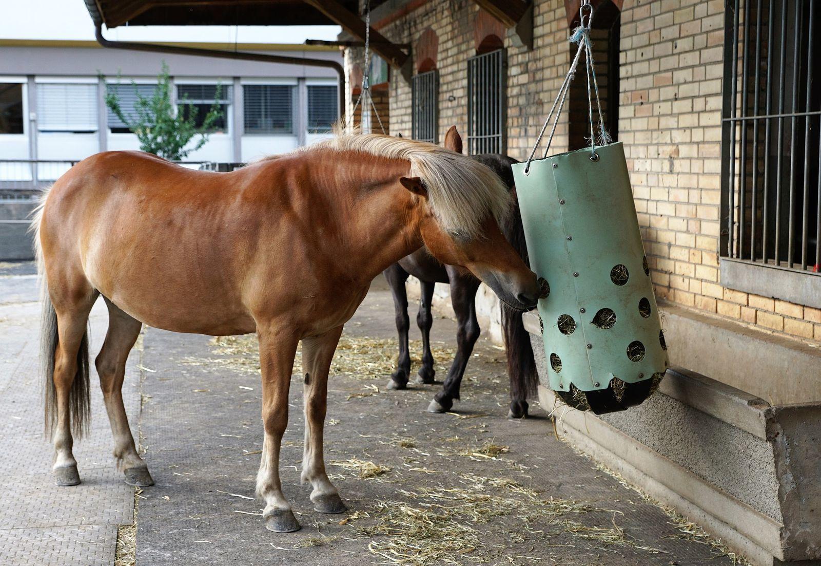 közös kenőcs ló számára