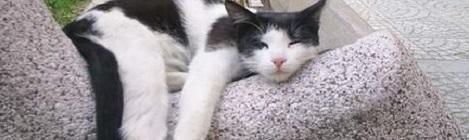 macska ízületi betegség