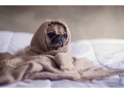 Kutyák leggyakoribb neurológiai betegségei