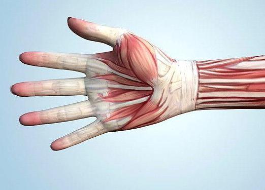 lábfájdalom a hüvelykujj ízületében)