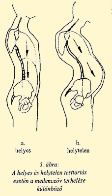 A csípőízület leggyakoribb betegségei