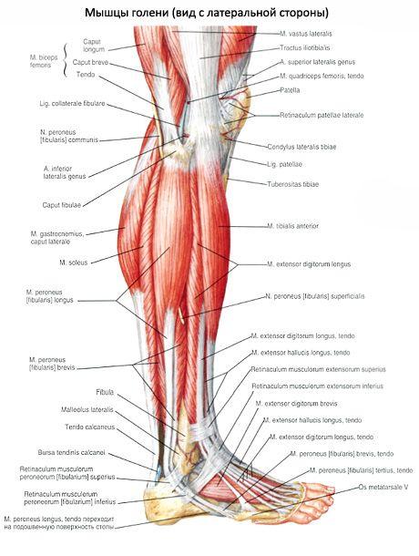 fájdalom a bokaízületben kondroitin és glükozamin csontritkulás