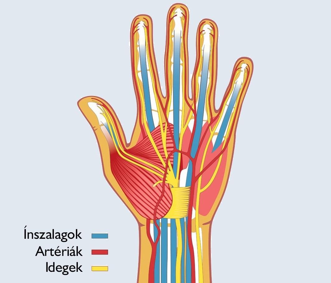 a csukló röntgenének károsodása)