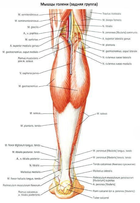 fájdalom a bokaízületben az erek és az idegek ízületeinek károsodása