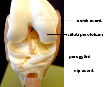 térd porckezelés nyaki osteochondrozis hormonális gyógyszerei
