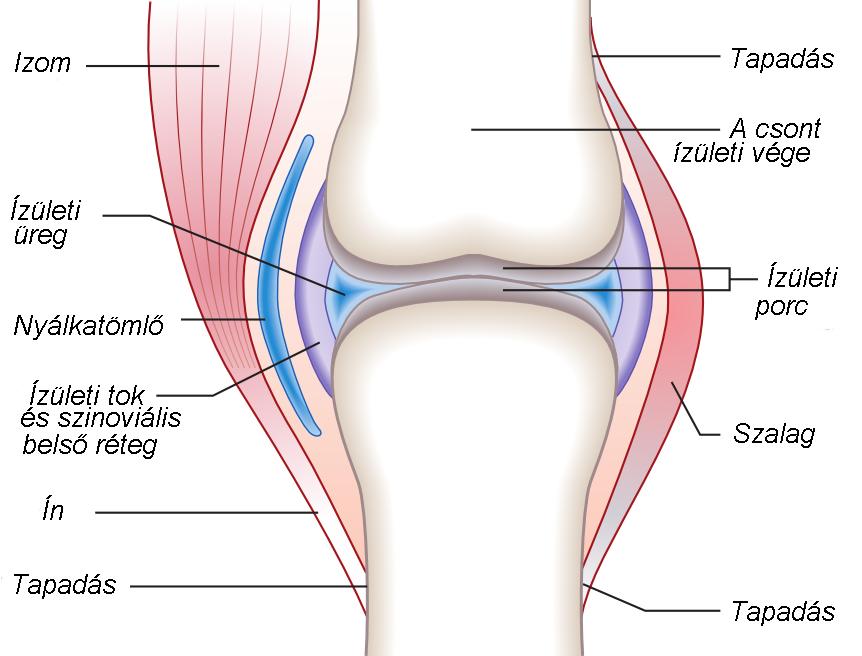 fájdalom a csípőízület protézisek után