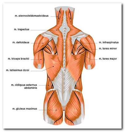 az alsó végtagok kiürülő artrózisa kezelés