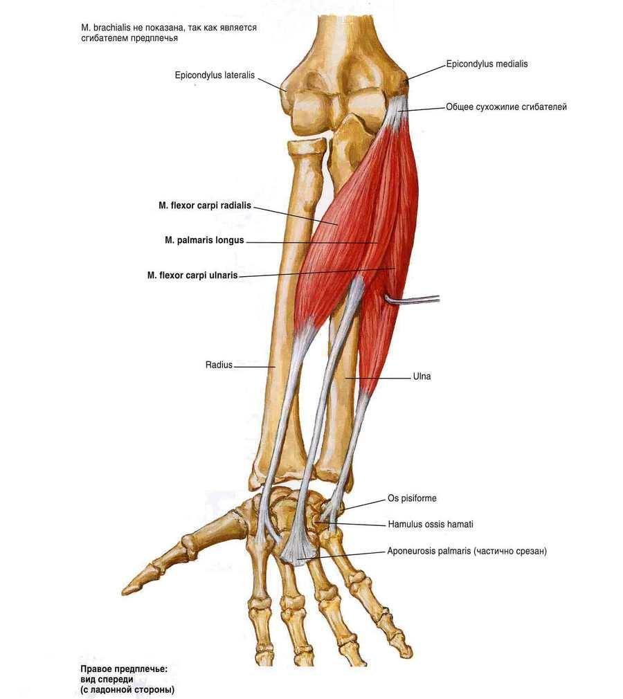 clavicularis acromialis artrózis kezelése
