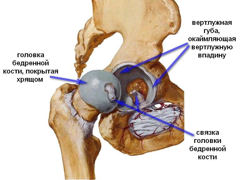 milyen fájdalmak történnek a csípőízület artrózisával