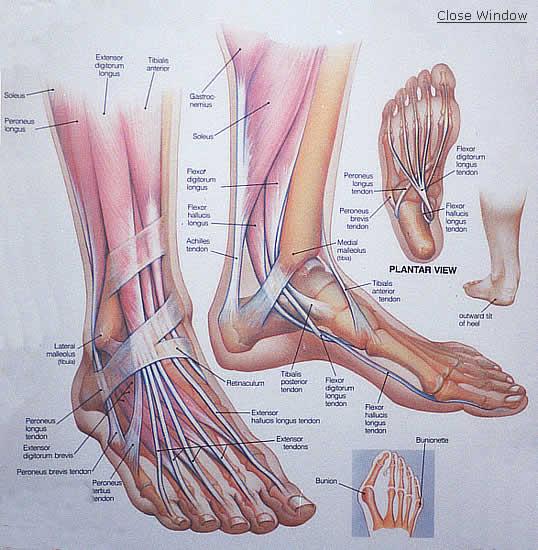 a lábak és a sarok ízületei