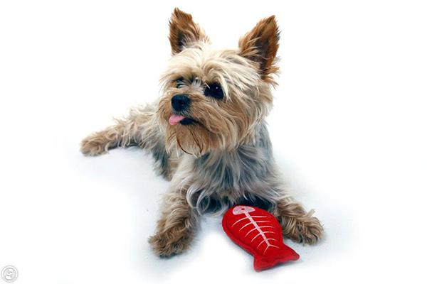 A szeptikus ízületi gyulladás tünetei és kezelése kutyáknál - HáziPatika