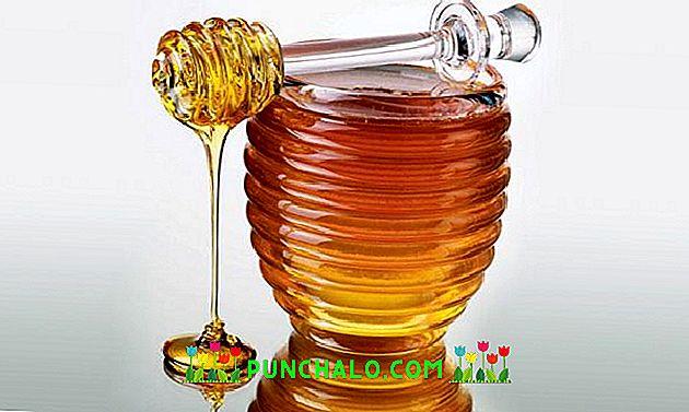 méhkezelés ízületi gyulladás és ízületi gyulladás kezelésére
