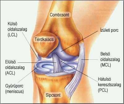 térdízület deformáló ízületi gyulladása)