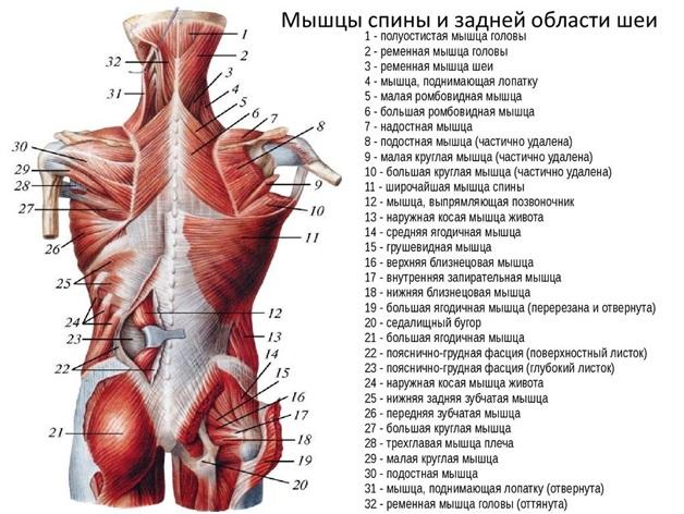 mi a teendő, ha a karok ízületei fájnak)