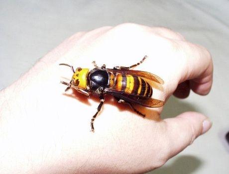 artrózis méhcsípés-kezelés)