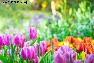 Tavaszi láz vagy tavaszi fáradtság?