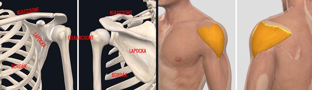 a vállízület artroszkópos kezelése)