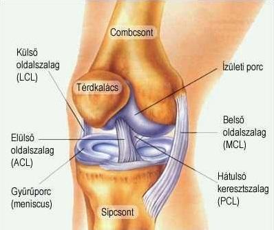 ízületi sérülések futás közben)