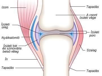 a térdízület 2. fokú ízületi gyulladása okozza