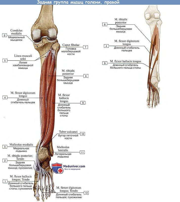 az alsó lábszárcsontok kezelése