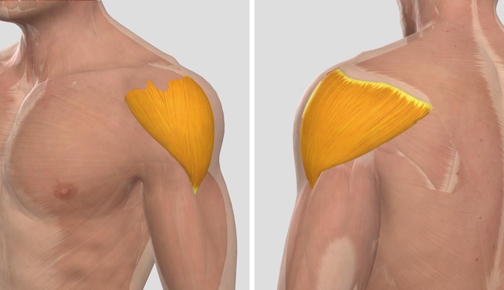 1 fokos bal vállízület osteoarthritis