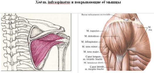 a vállízület gennyes artrózisa)