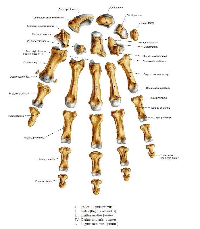 ahol a kézízületek fájdalmát kezelik