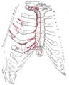 fáj a szegycsont clavicularis ízülete hal az ízületi fájdalom keresztrejtvény