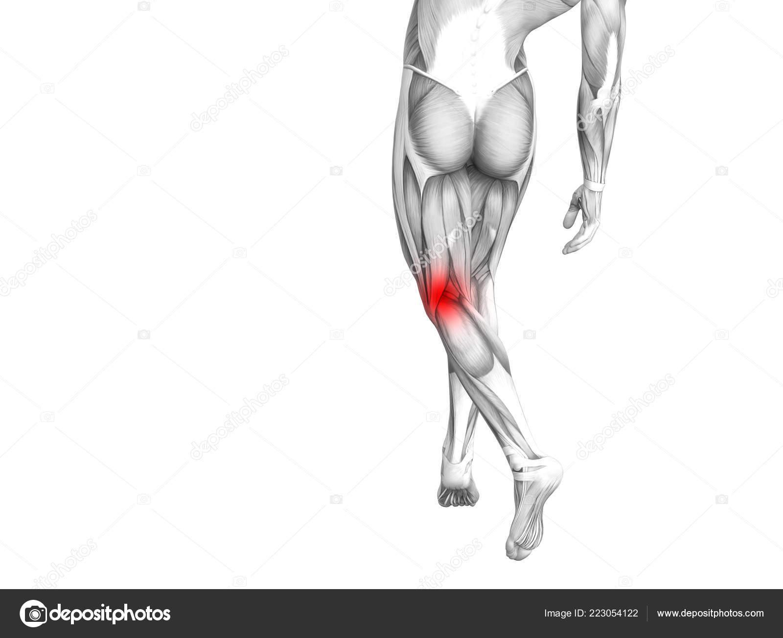 csontbetegség térd osteoporosis ízületi betegség hab