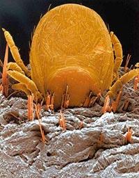 váll neuralgia, mint a kezelés vörös kaviár ízületi fájdalomra