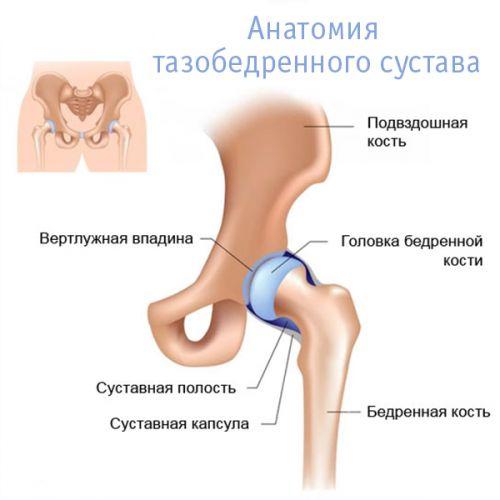 hasi fájdalom, csípőízület artrózisával
